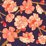 Seamless background pattern of pink Sakura blossom or Japanese flowering cherry symbolic of Spring stock illustration