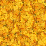 Seamless background pattern texture made of  daffodil flowers Royalty Free Stock Photo