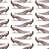 Seamless background of the peacocks. Pattern of the drawn peacocks Stock Image
