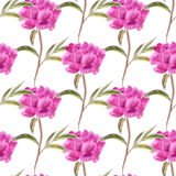 Seamless background with peonies Royalty Free Stock Images