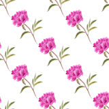 Seamless background with peonies Royalty Free Stock Photography
