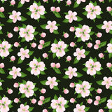 Seamless background with pink apple flowers. Vecto Royalty Free Stock Images