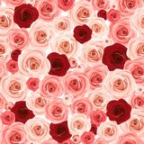 Seamless background with pink and burgundy roses. Vector illustration. Vector seamless background texture with pink and burgundy roses stock illustration