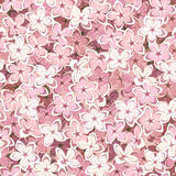 Seamless background with pink lilac flowers. Vector illustration. Stock Photos