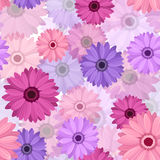 Vector Seamless background with gerbera. Royalty Free Stock Photo