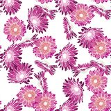 Seamless background with pink and purple gerbera. Vector illustration. Stock Photography