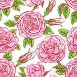 Seamless background of pink roses Royalty Free Stock Photography