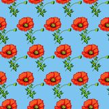 seamless background of poppies on a blue Stock Images