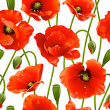 Seamless background: poppy. Vector seamless texture of red poppys Royalty Free Stock Photos