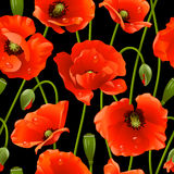 Seamless background: poppy vector illustration