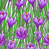 Seamless background with purple crocuses Royalty Free Stock Images