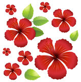 Seamless background with red hibiscus flowers Stock Images