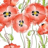 Seamless Background with Red Poppy Flowers Royalty Free Stock Photo