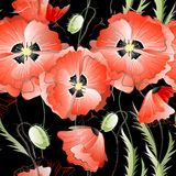 Seamless Background with Red Poppy Flowers Royalty Free Stock Images