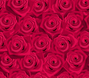 Seamless background with red roses. Royalty Free Stock Image