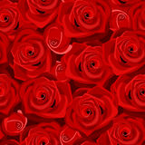 Vector Seamless background with red roses. Royalty Free Stock Image