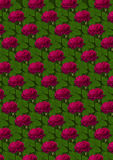 Seamless background of red roses on a green background Royalty Free Stock Photos