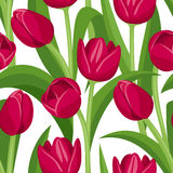 Vector seamless background with red tulips.  Stock Photos