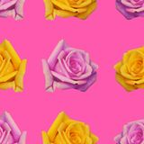 Seamless background with repeating buds of roses pink and yellow color. Seamless pattern with repeating buds of roses pink and yellow color, flower, wallpaper stock photo