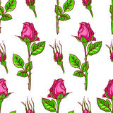 Seamless background of roses Royalty Free Stock Images