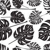 Seamless background with silhouette tropical monstera leaves. Black on white background royalty free illustration