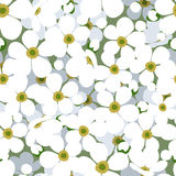 Seamless background with small white flowers. Stock Photo