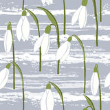 Seamless  background with snowdrops. Stock Photography