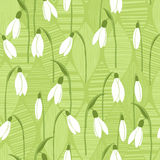 Seamless  background with snowdrops. Floral pattern with snowdrops. Spring  background Stock Images