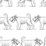 Pattern of the terriers on a walk. Seamless background of the strolling airedale terriers stock illustration