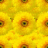 Seamless background with sunflower. Background made from photo details of a sunflower stock illustration