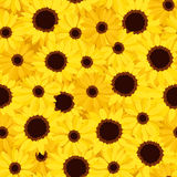 vector seamless background with sunflowers and cal Royalty Free Stock Photos