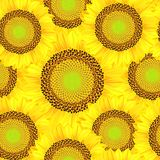 Seamless background from sunflowers. Illustration. Stock Images