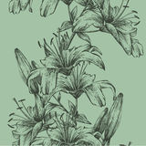 Seamless background with tiger lilies, hand-drawing. Vector illu Royalty Free Stock Images
