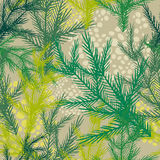 Seamless background with tree fir branches. Vector illustration Royalty Free Stock Images
