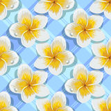 Seamless background tropical flowers plumeria Stock Photography
