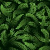 Seamless Pattern, Palm Leaves Stock Images