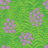 Seamless background with verbena flowers Royalty Free Stock Image
