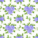 Seamless background with Vinca or periwinkle. Isolated on white Royalty Free Stock Photography