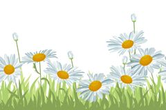 Seamless background with white daisies Royalty Free Stock Photos