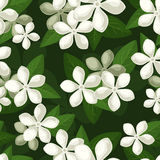 Seamless background with white flowers. Stock Photos