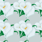 Seamless background with white lilies. Stock Photography