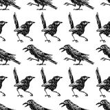 Pattern of the sketches of crows and magpies. Seamless background of the wild birds Royalty Free Stock Photography