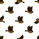 Seamless background for World Sparrow Day. Vector Illustration for the holiday bird. Space for text. World Sparrow Day. Vector Illustration for the holiday bird Stock Photography