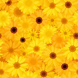 Seamless background with yellow flowers. Stock Images