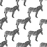 Seamless background with zebras. Seamless background with zebras, silhouette on a white background. Vector illustration. Wild African animals stock illustration