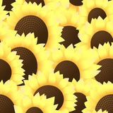 Seamless backgrounds of many sunflowers Royalty Free Stock Photos