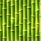 Seamless Bamboo Background. Royalty Free Stock Photography