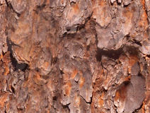 Seamless Bark Stock Images