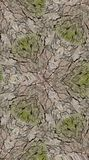 Seamless Bark Texture Pattern Royalty Free Stock Photo