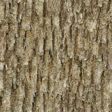 Seamless bark tree Royalty Free Stock Photography